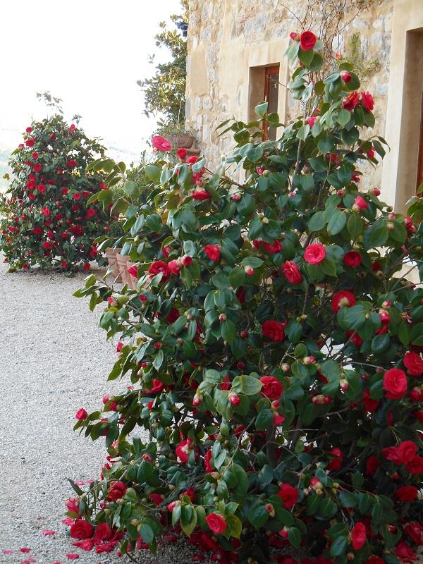 Voorjaarsboden; Camelia's, bollen en tulpen