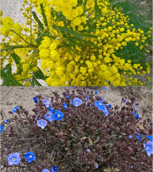 Eerste kleuren in de tuin
