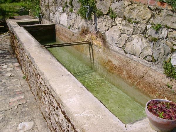 Water in de tuin en drie prachtige mediterrane planten bisconti